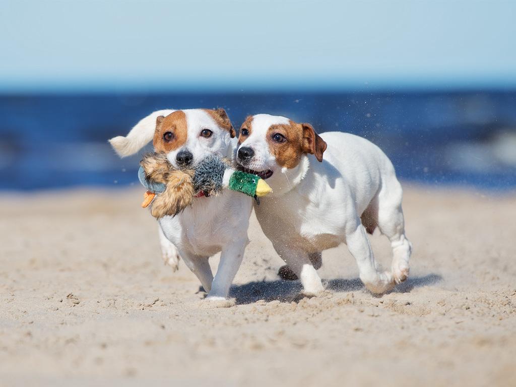 Giochi per cuccioli di cane